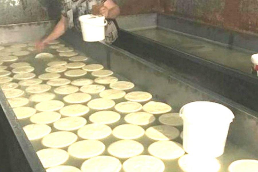 Брянское молоко поставлялось на подпольную сыроварню в Курской области