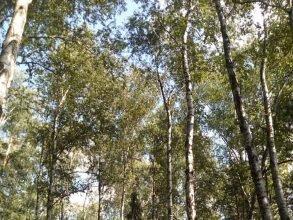 Брянцам позволили посещать леса