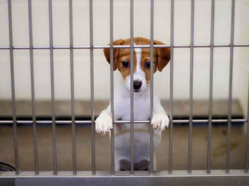 В Брянской области оценили стоимость содержания бездомных собак