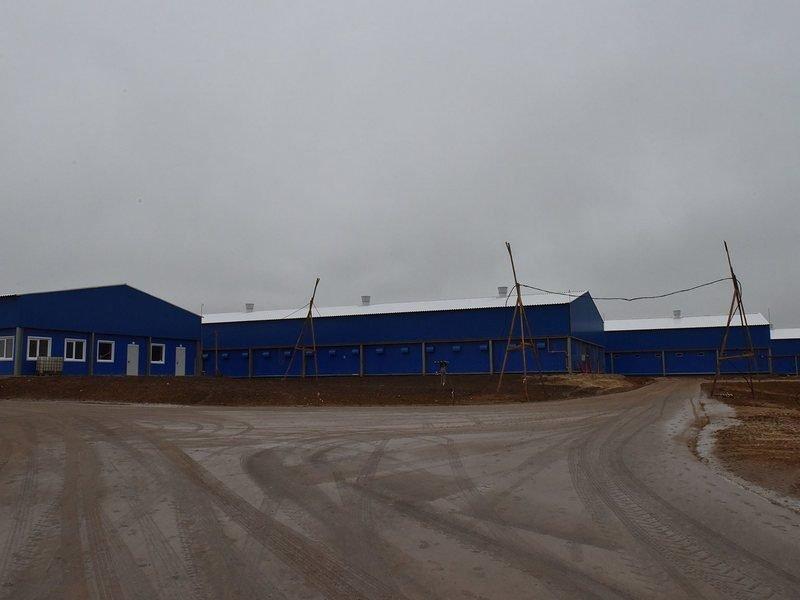 В Брянской области достраивается крупный свинокомплекс