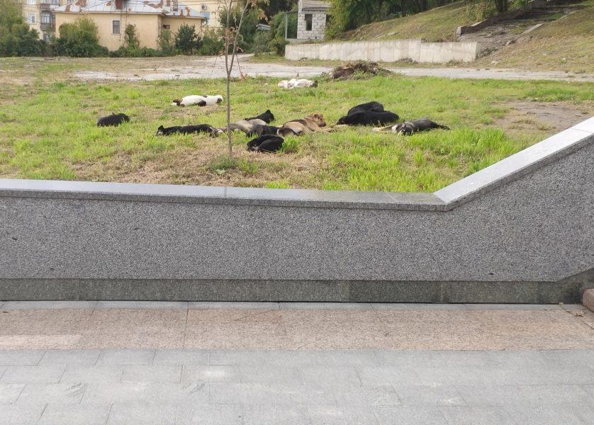 Брянские чиновники ждут жуткой гибели на лестнице к Набережной