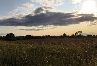 Брянские активисты требуют прекратить добычу песка возле Хотылево