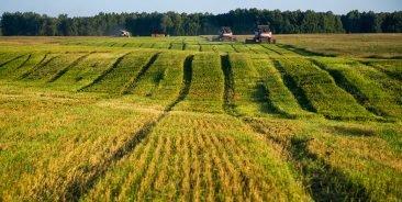 В Брянской области чиновники выставили на аукцион чужую землю