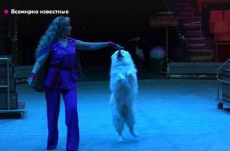 В Брянск приехал всемирно известный цирк Филатовых