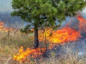 В Суземском районе тушат лесной пожар
