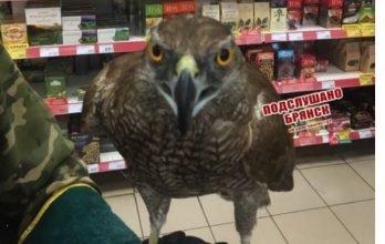 В брянском «Магните» сняли на фото хищную птицу