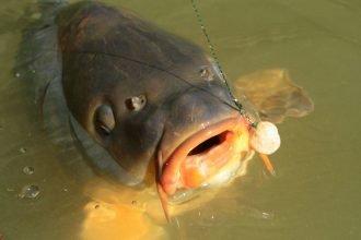 Брянские эксперты освоили новый способ выявления опасной рыбы