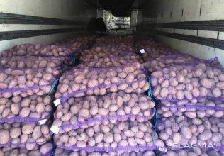 Брянские аграрии в 6 раз увеличили экспорт картофеля