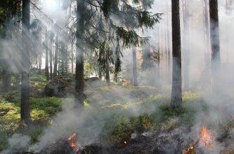 Брянские пожарные потушили огонь в Луганском лесничестве