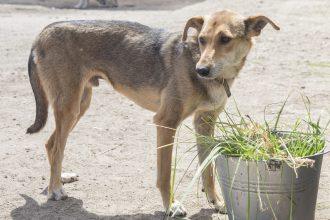 В Брянске покалеченному в аварии псу Микки нужен заботливый хозяин