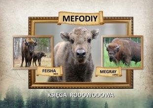 Родословную первого брянского зубренка Мефодия узнали в Польше