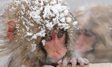 В Брянской области 24 сентября синоптики прогнозируют заморозки до -3ºC