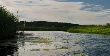 В Брянской области молочный комбинат уличили в загрязнении реки