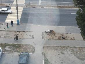 В Брянске свора бездомных собак окружила школу № 28