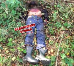 В лесу под Брянском возле Новых Дарковичей нашли труп