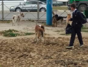 В Брянске возле школы №28 собаки едва не загрызли ребёнка