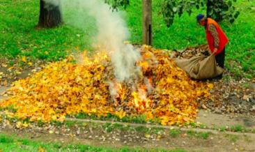 Севские чиновники сожгли листья после субботника