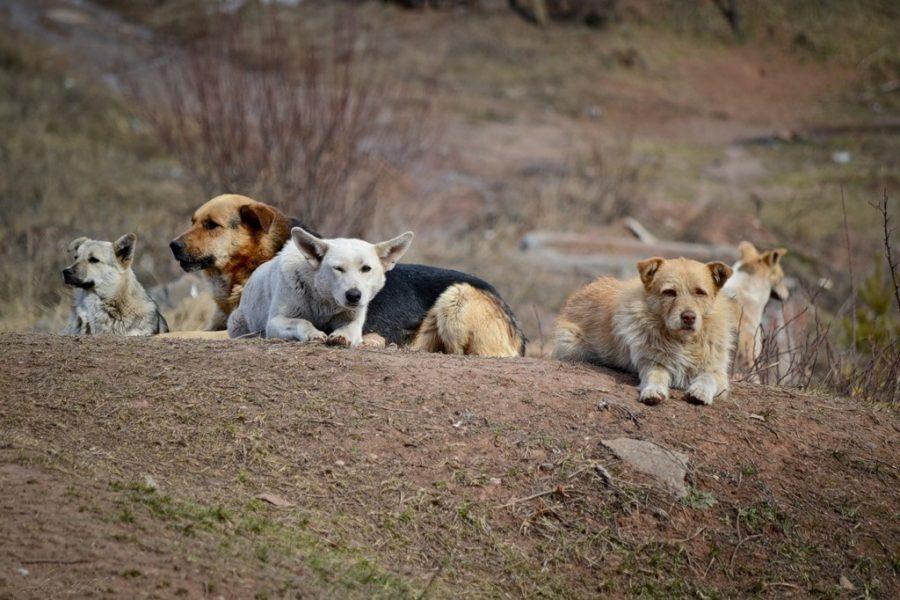 В Брянске на старом аэропорту собаки искусали девушку