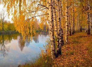 В Брянск сегодня пришла дождливая осень