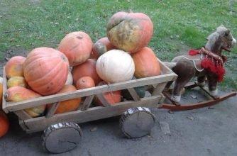 В Брянске открыли сбор урожая для обитателей зоопарка