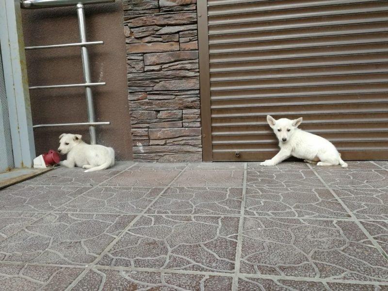 В Брянске неизвестные подбросили к аптеке 2 очаровательных щенков