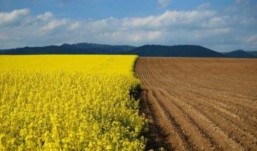 В Жуковском районе предпринимателя заставили засеять 22 га земли