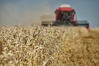 Выращенное на Брянщине зерно признали годным для производства хлеба