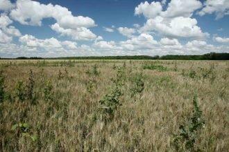 Владельца сельхозугодий в Трубчевском районе оштрафовали за сорняки