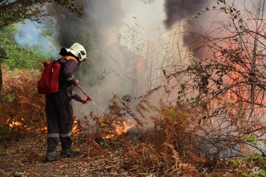 Под Брянском тушили лесной пожар