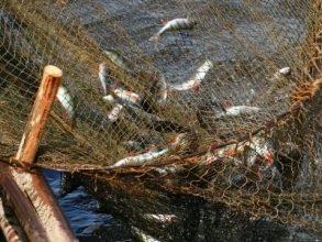 Жителя Клинцов осудят за незаконный лов рыбы в местах нереста