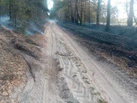 В Клинцовском районе тушили лесной пожар на площади в 2 га