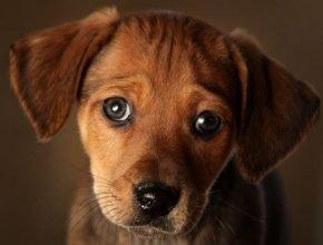 В Брянске 17-летнюю студентку обвинили в афере при сборе денег на лечение собак