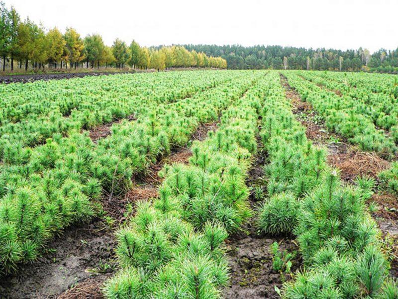 На Брянщине проект «Сохранение лесов» выполняется на 94%