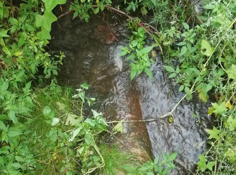 В Клинцах канализационные воды загрязняют речку Московку