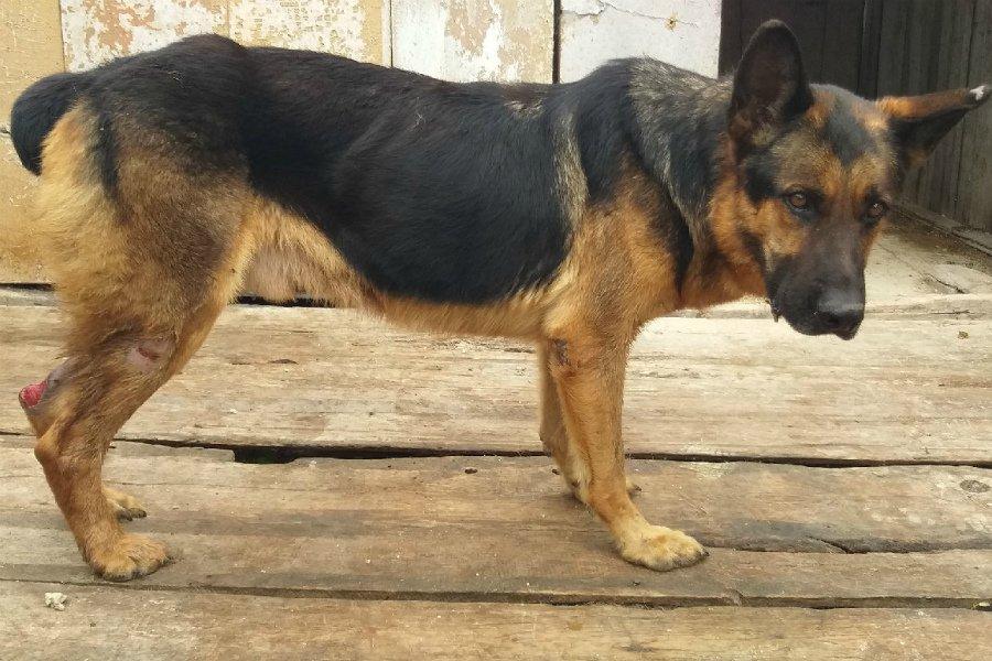 В Трубчевском колледже питомник для собак превратили в концлагерь