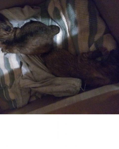 В Клинцах кто-то выкинул на помойку пакет щенков