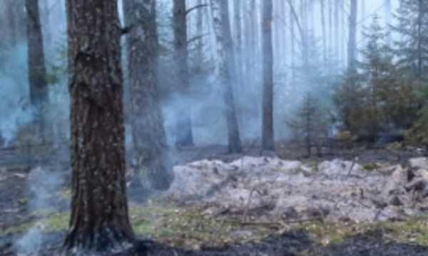 Под Унечей потушили лесной пожар