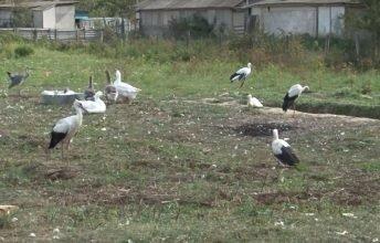 В брянском селе многодетная семья создала приют для пернатых