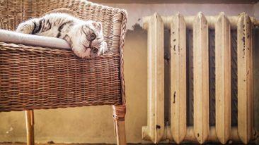 Прокуратура предложила брянцам жаловаться на отсутствие тепла