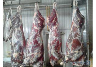 В Брянской области делали полуфабрикаты из мяса сомнительного качества
