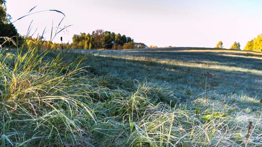 На Брянщине в последний день октября похолодает до -8