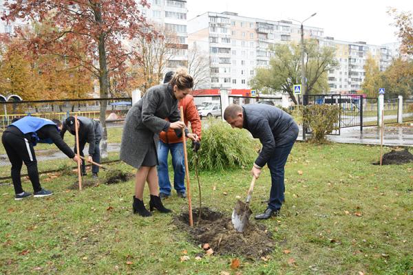В Брянске возле школы №61 высадили аллею