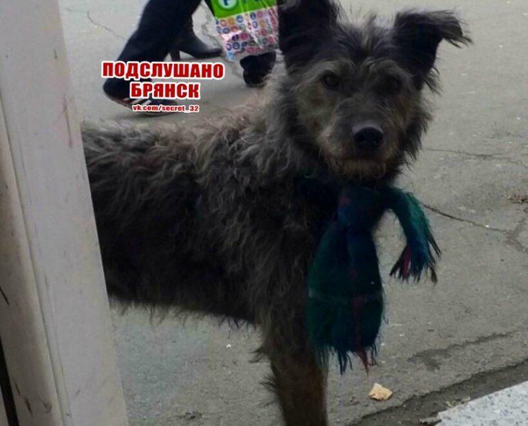 Брянцев развеселил пес в шарфе