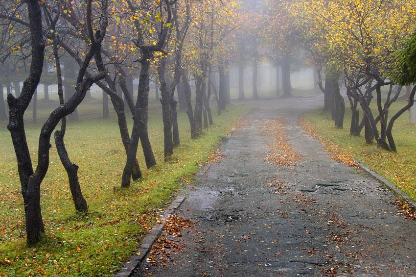 В Брянской области в понедельник туманно и тепло