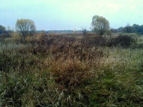 На Брянщине заросло травой и кустами 290 га сельхозземель