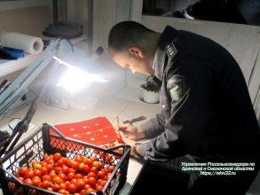 В Брянск из Турции привезли 10 тонн червивых помидоров