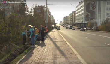 В центре Брянска тротуар на дамбе обрамила живая изгородь