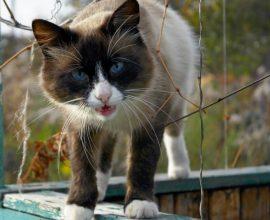 Брянский музыкант рассказал о неудачной попытке спасти кота