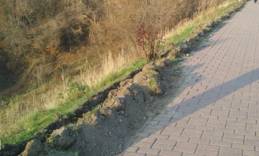 Брянские чиновники забыли высадить кусты на проспекте Ленина