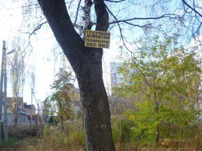 Брянцев возмутило изуродованное рекламой дерево